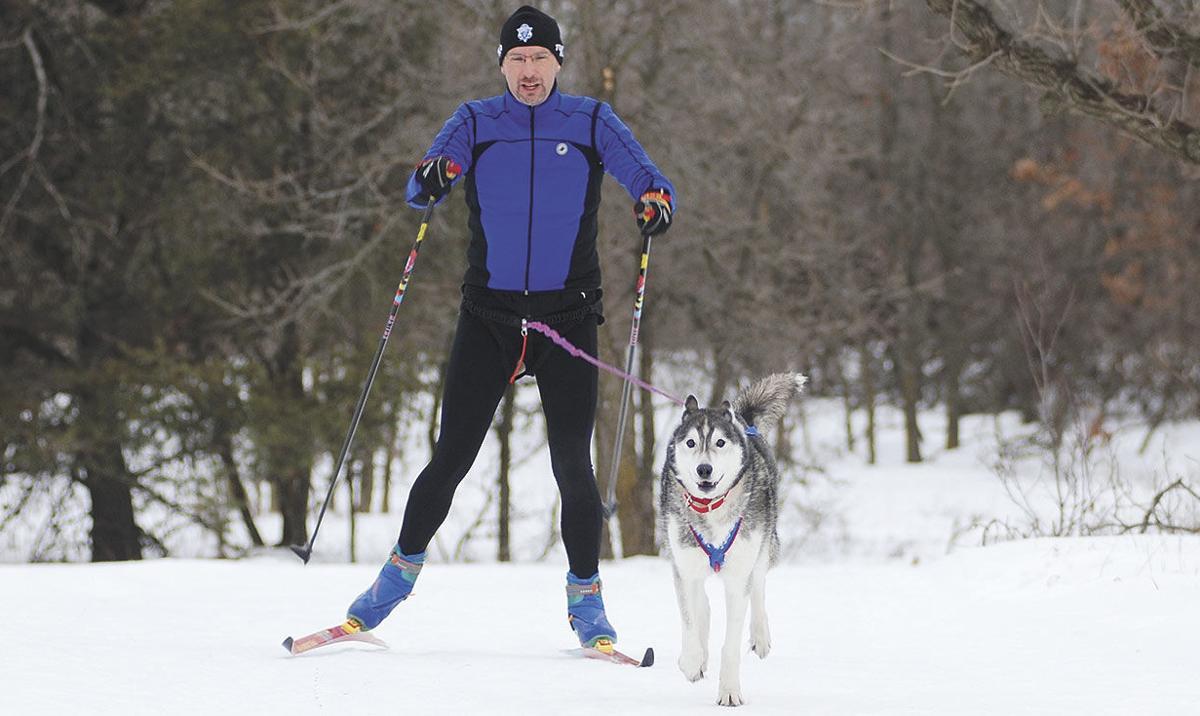 Dog-Skijoring4.jpg