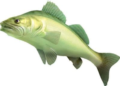 Could fish be intelligent?