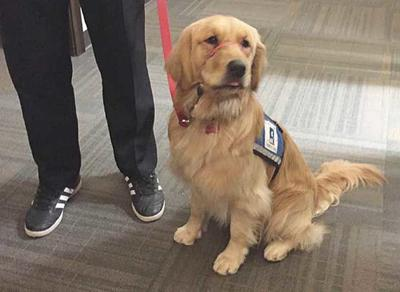 Ramsey County Attorney's Office adds facility dog