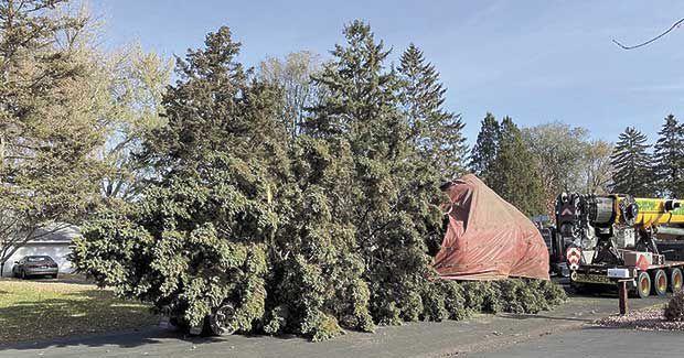 SV11-26-Christmas-tree-photo-story-72140477_1616421358500237_7744142328964579328_o.jpg