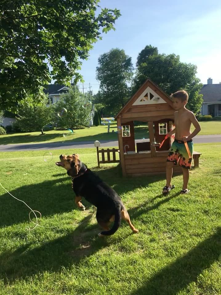 Summer Fun: Pets Edition