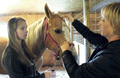 Plattsburgh horse first in world with pain-easing implant