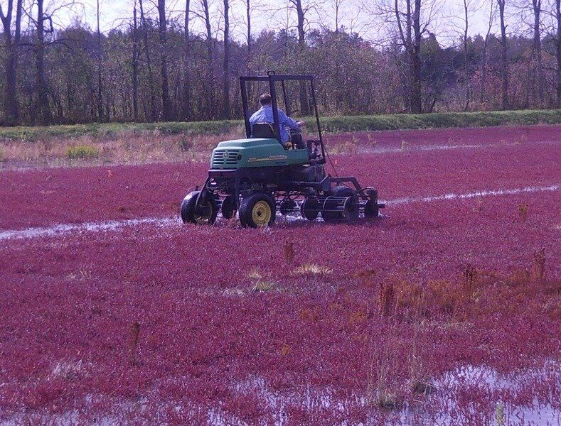 Cornell Ag Connection: A harvest of North Country cranberries