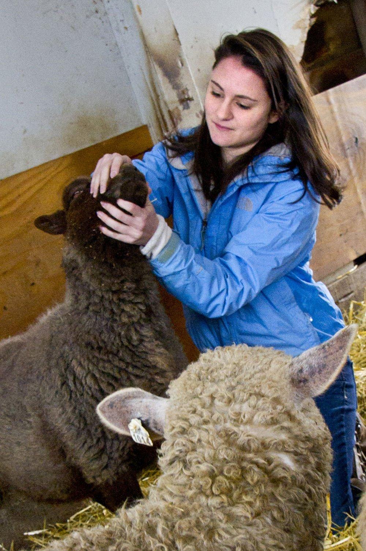 PPR veterinary 2 0317