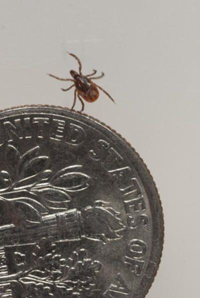 'Tick'ing time bomb: Tick season is here