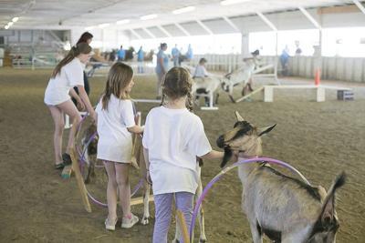 4H families ready for Franklin County Fair