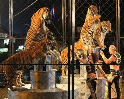 Tiger show plans draw protests