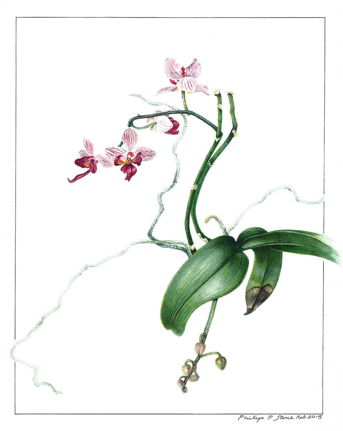 At Woodbury Public Library: Plant Pressings and Botanical Drawings Exhibit Planned