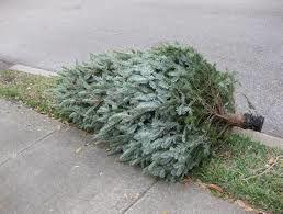 Tree Pick-up Slated