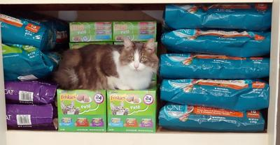 FOOD DRIVES FOR SPECIAL NEEDS CATS
