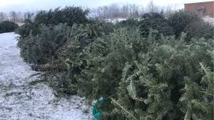 Transfer Station to Accept Christmas Trees