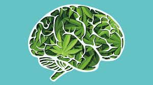 Cannabis and Adolescent Brain to Be Focus of Discussion