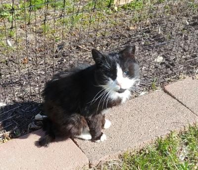 Rescue Fund Seeks Help for Tiny Senior Cat