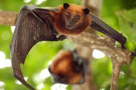 Beneficial Bats Topic of Program