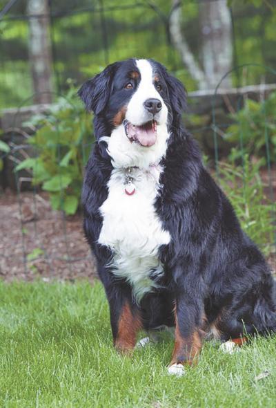 REWARD of $7,500 FOR MISSING DOG