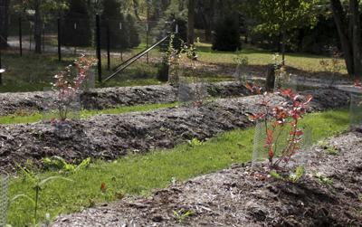 Gardening Wet Soil