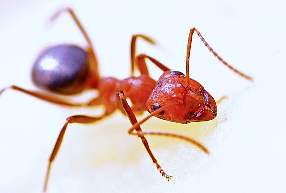 Bug Problems