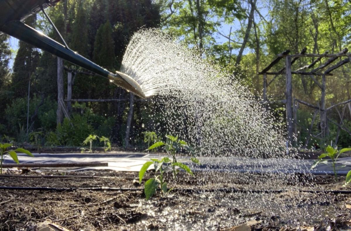 Gardening How Much Rain