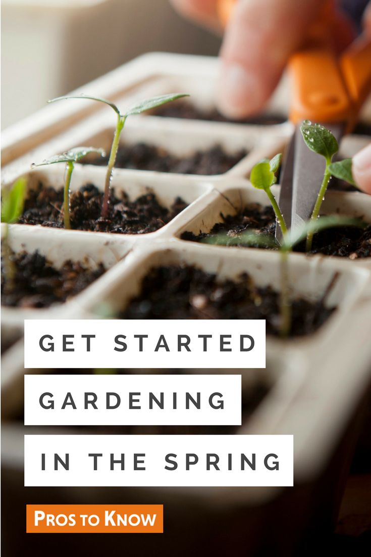 Get started gardening in the spring
