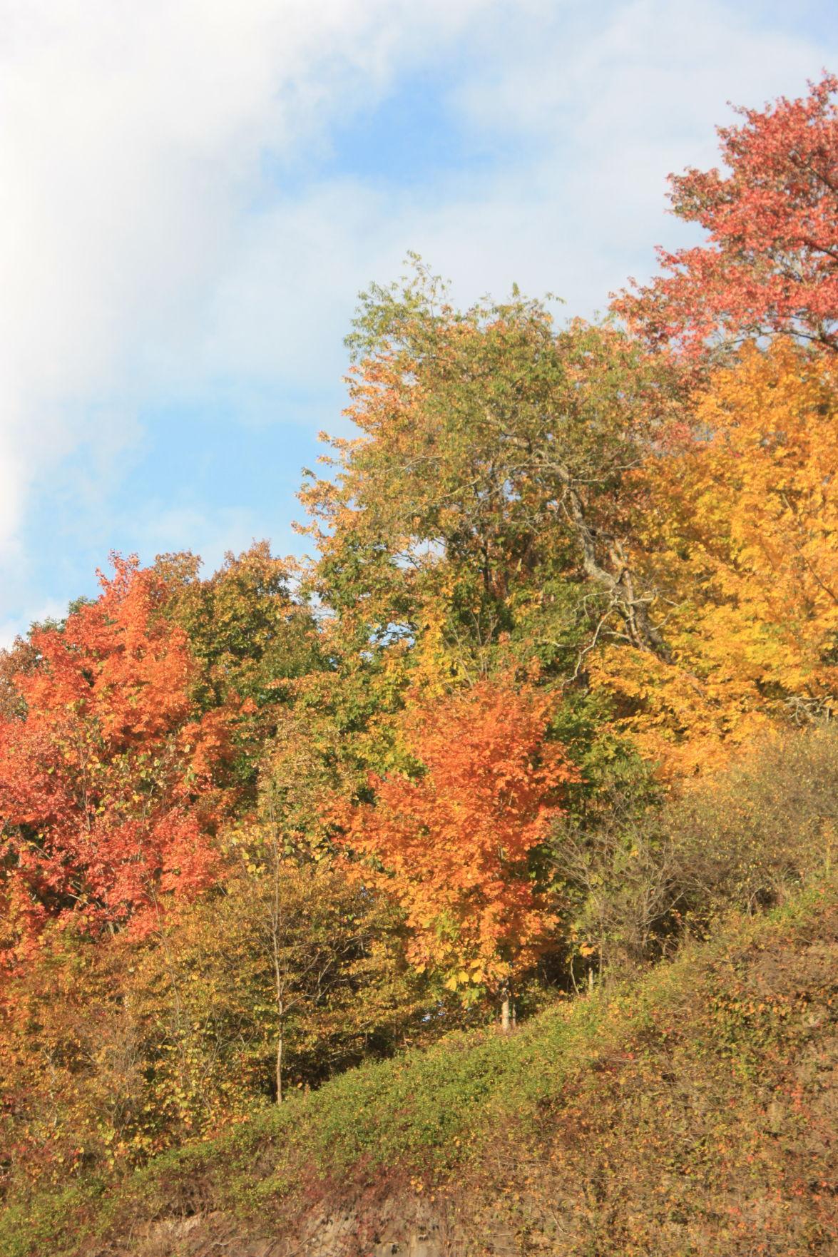 10-06 PT Autumn5.JPG