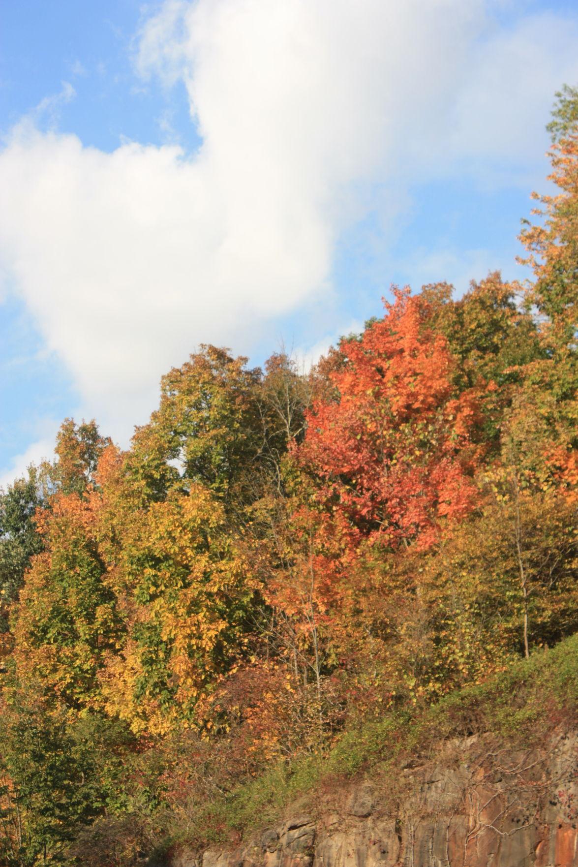 10-06 PT Autumn6.JPG