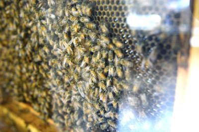 Bee story2.jpg