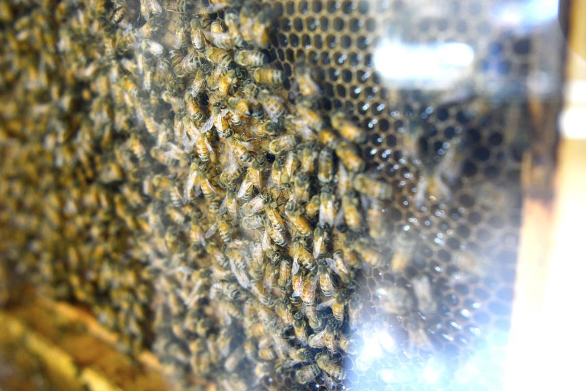 Hive a buzzin