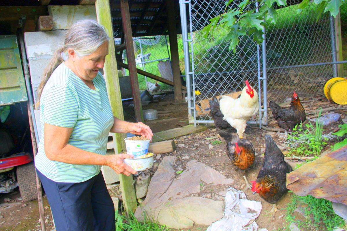 dunn farms chickens in backyard paradise gallery ptonline net