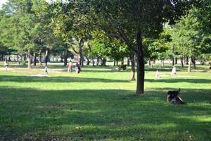 Violent crime in parks rises by 23 percent 1