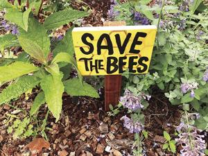 A sidewalk haven for bees, butterflies: the pollinators 2