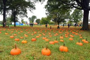 Five things to do in Queens this weekend! Oct. 12-14