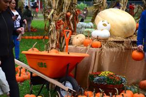 Five things to do in Queens this weekend! Oct. 11-13 _ 1