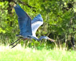 Shorebird Festival celebrates avian life on the bay 2