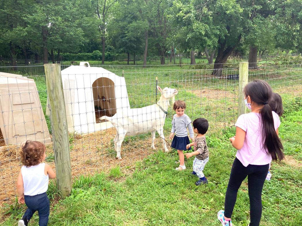 Farm animals welcome baa-ack families 2