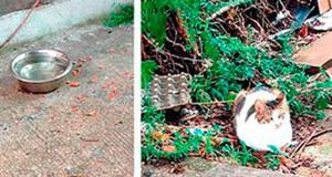 Fresh Meadows feral cats cause lawn nightmare 1