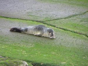 Seal makes splash in Bayside 1