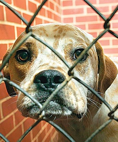 Give animals in Queens the shelter they deserve 2
