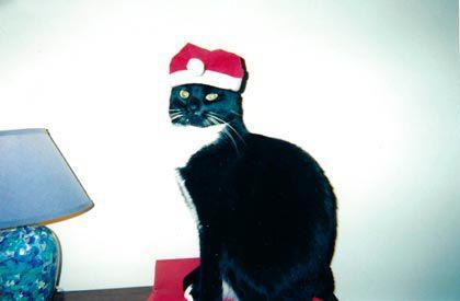 Holiday photo contest! 8