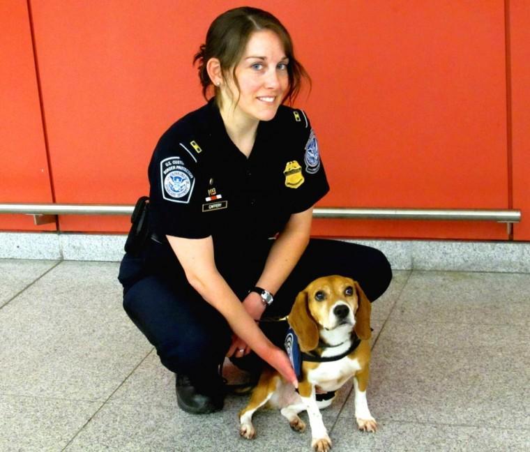 JFK's Beagle Brigade: pups battling aliens 1