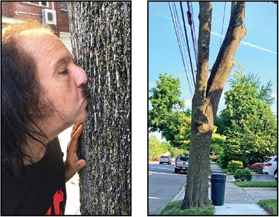Ron Jeremy and his tree both stand trial 1