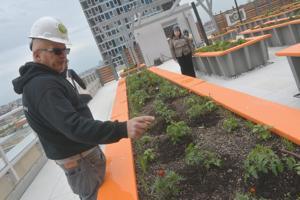 Hunters Point South gets GrowNYC urban farm 2