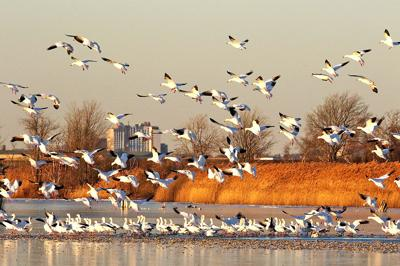 Spring to bring new sights, flocks to Jamaica Bay 1