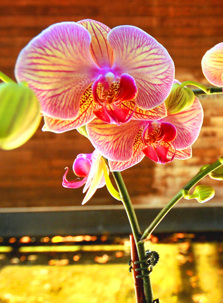 Weekend orchid show 1