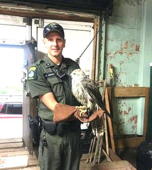 Rare bird returned to owner after scare 1