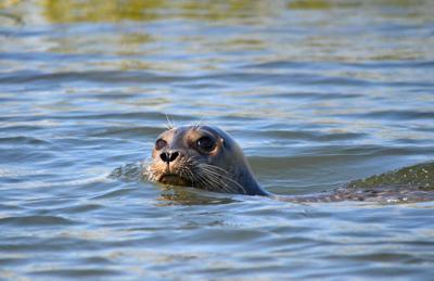 Seal pup hurray! Bay marks milestone 1