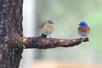 At APEC, birding, nature walks and egg dropping 1