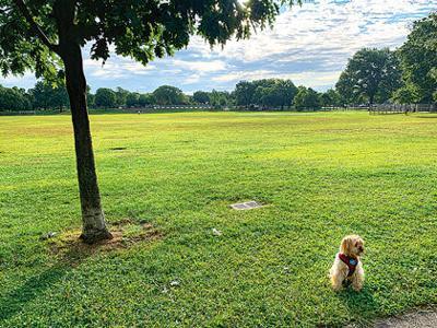 Unpopular dog leash bill withdrawn by Koz 1