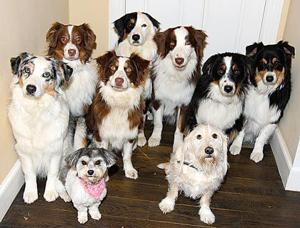 Study: MidVille has dog crap problem 1