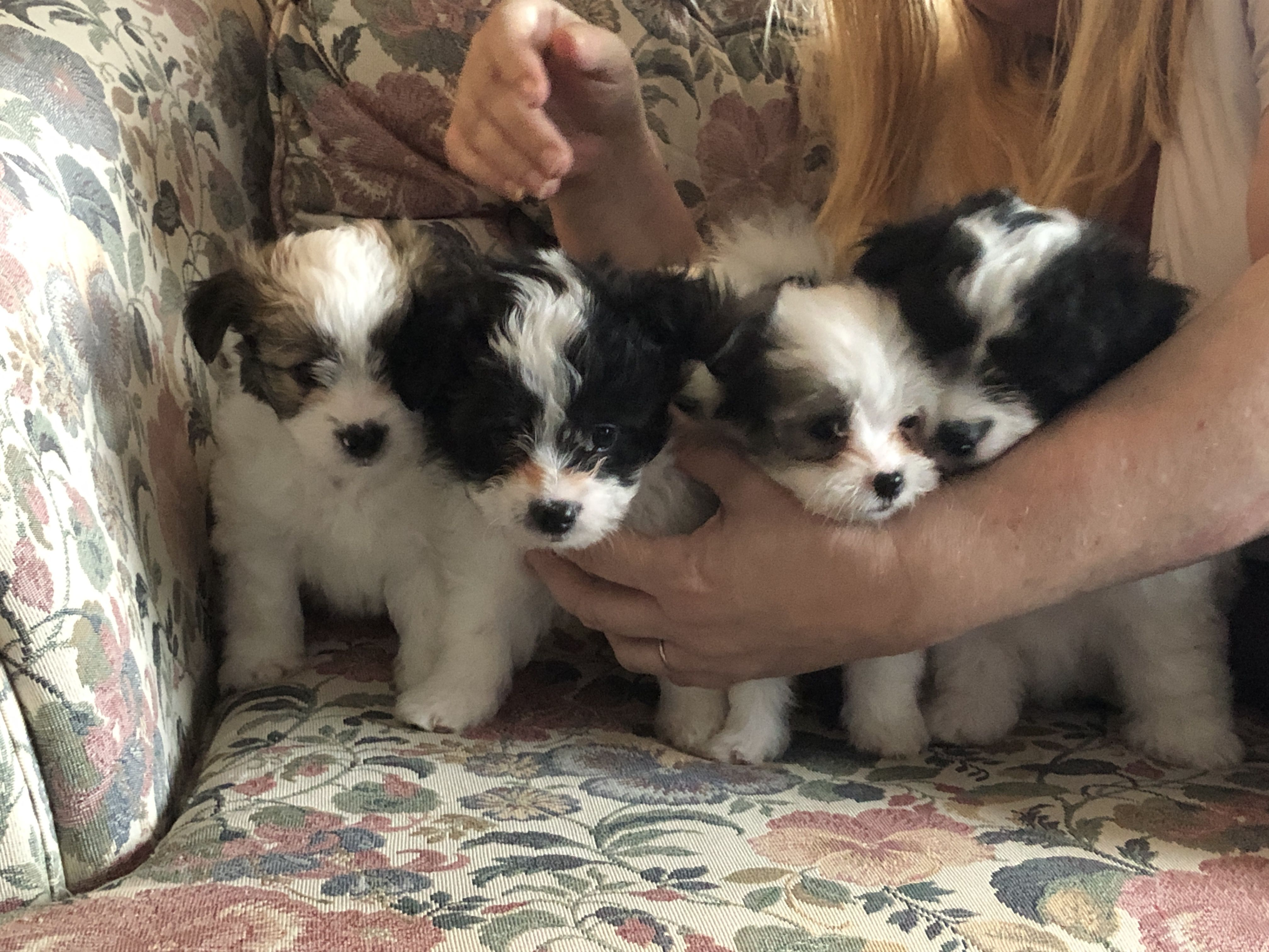 Puppies image 1