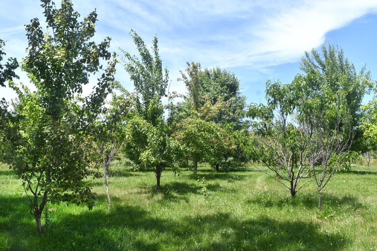 061521-qc-nws-orchard-026